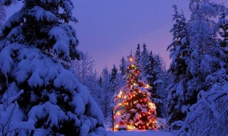 С Новым годом, дорогие наши читатели, зрители, друзья, братья и сестры!